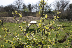 rife community orchard